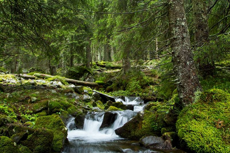 Лес на Мармаросах